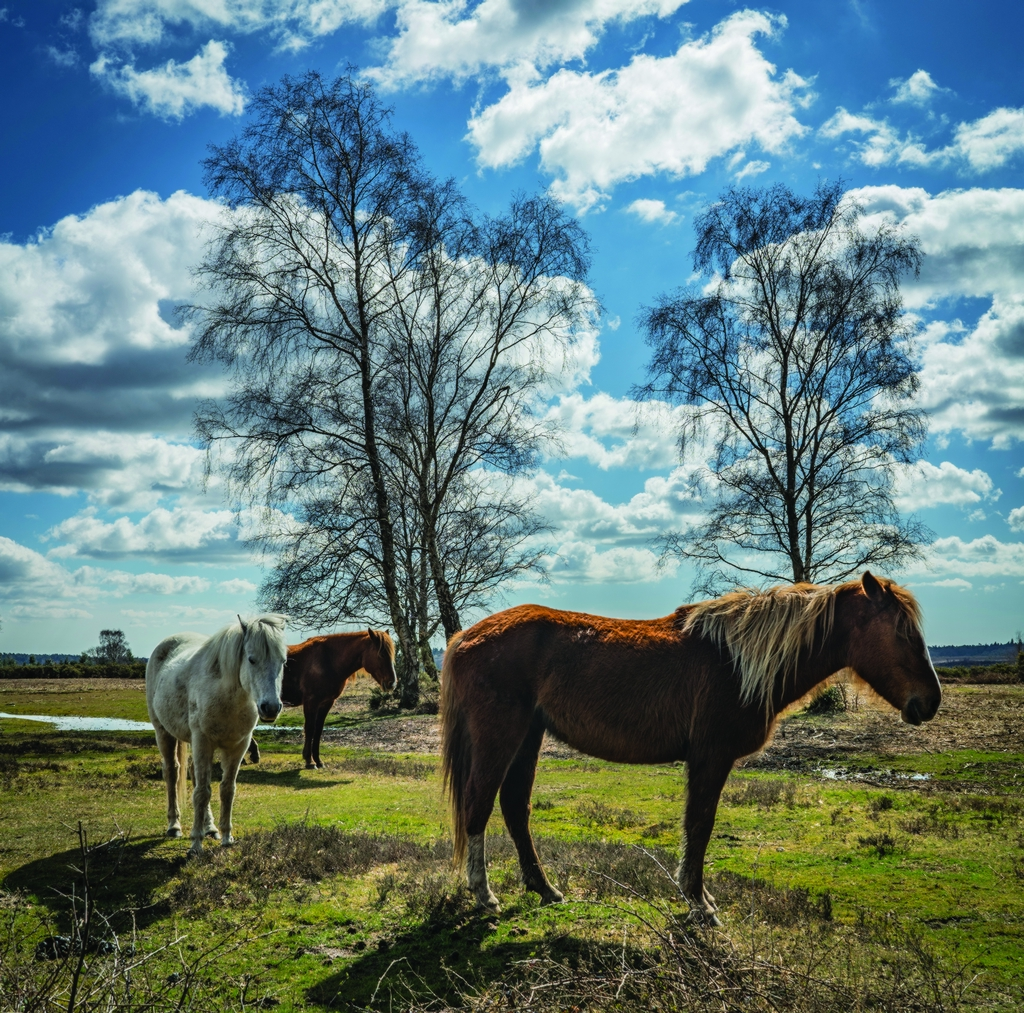 New Forest -
