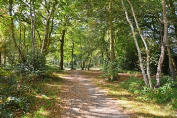 Woodland Walk Behind