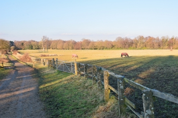 Surround Fields